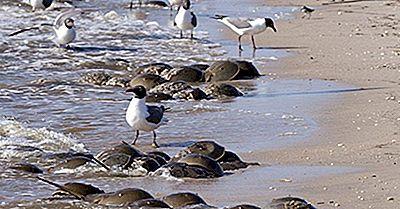Delaware Bay, USA