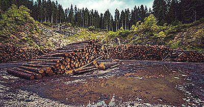 Gli Impatti Devastanti Della Deforestazione