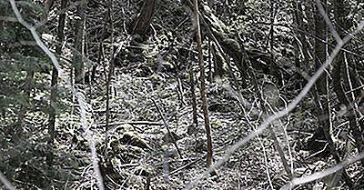 Știați Că Pădurea Aokigahara Misterioasă Este Cunoscută Și Ca Pădurea De Sinucidere?