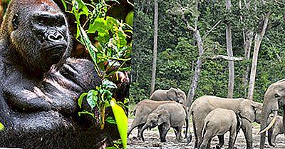Økologiske Regioner I Den Sentralafrikanske Republikk