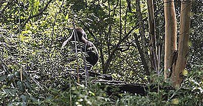 Regioni Ecologiche Della Guinea Equatoriale