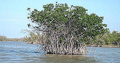 Régions Écologiques Du Gabon