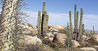 Regioni Ecologiche Del Messico