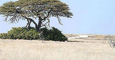 Regiunile Ecologice Ale Namibiei