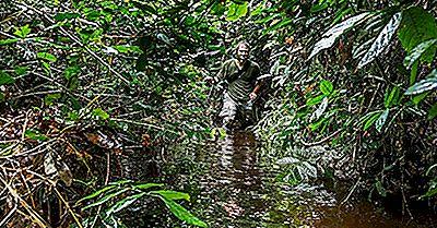 Regioni Ecologiche Della Repubblica Del Congo (Congo-Brazzaville)