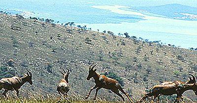 Régions Écologiques Du Rwanda