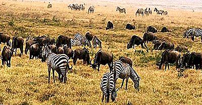Ökologische Regionen Von Tansania