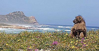 Los Ocho Puntos De Biodiversidad De África