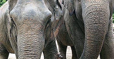 Animali In Via Di Estinzione Del Bangladesh