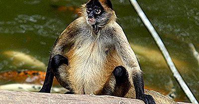 Gefährdete Säugetiere Von Kolumbien