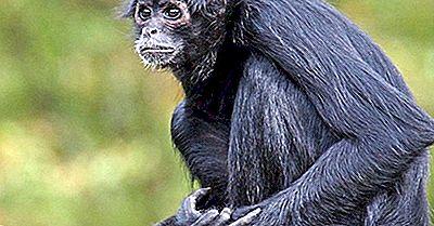 Gefährdete Säugetiere Von Ecuador