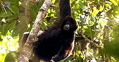 Mamíferos En Peligro De Extinción Del Perú