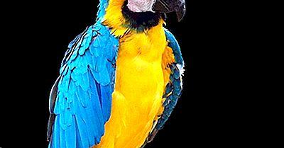 Espécies De Aves Endêmicas Da Bolívia