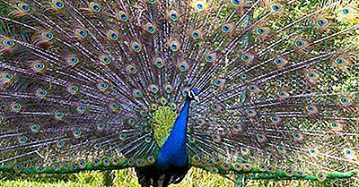 Endemische Vögel Der Demokratischen Republik Kongo (Kongo-Kinshasa)