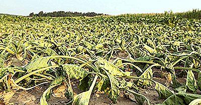 L'Extinction De La Faune Menace L'Approvisionnement Alimentaire Mondial