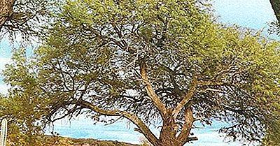 Gran Chaco Lowlands Von Südamerika