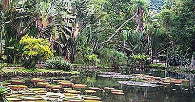 Habitater Og Økosystemer I Brasil