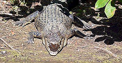 Cele Mai Grele Reptile Vii Din Lume