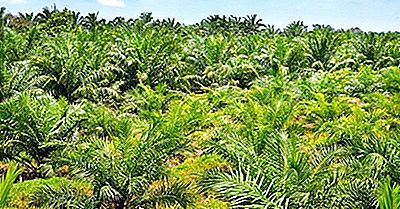 Wie Zerstört Die Palmölindustrie Wildtiere Und Ihre Lebensräume?