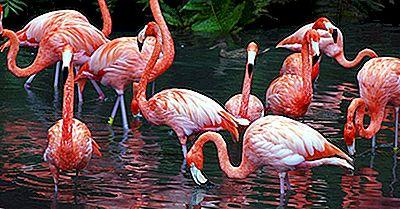 Quantas Espécies De Flamingos Vivem No Mundo?