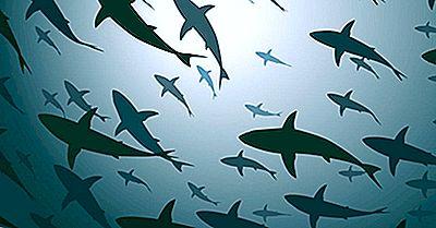 Combien D'Espèces De Requins Y A-T-Il?