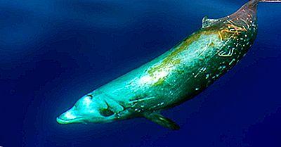 Cât De Multe Tipuri De Balene Vii Trăiesc În Lumea De Azi?