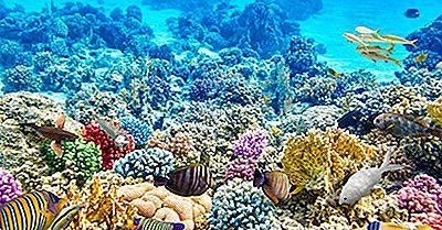 Quantos Tipos De Recifes De Coral Existem?