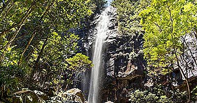 Combien De Types De Forêts Se Trouvent En Australie?
