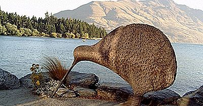 ¿Cuántos Tipos De Kiwis Viven En Nueva Zelanda?