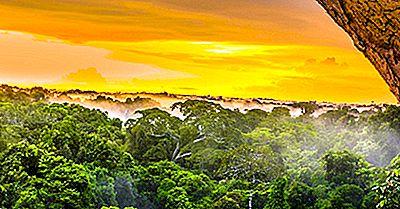 Hvor Meget Af Jordens Overflade Er Dækket Af Regnskove?
