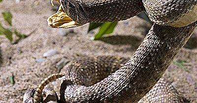 Serpientes Asesinas De América Del Norte