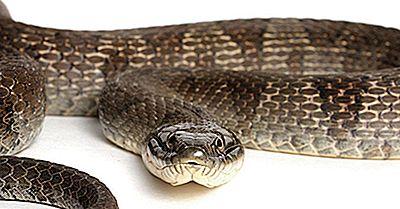 Faits Sur Le Serpent D'Eau Du Lac Érié: Animaux D'Amérique Du Nord