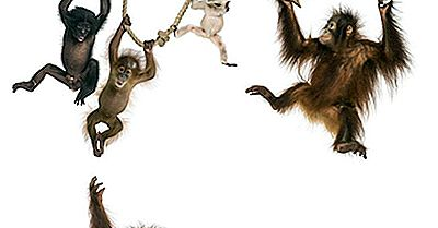 Liste Des Primates Par Population