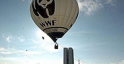 Principales Organizaciones Internacionales De Conservación De La Vida Silvestre Activas En El Mundo Hoy