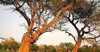 Parques Nacionales Y Reservas De Malí