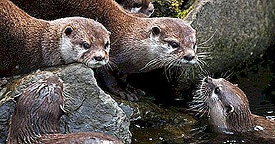 Zoogdieren Van De Filippijnen