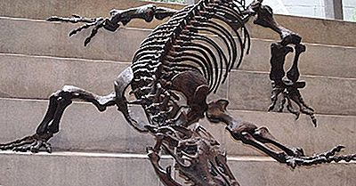 Megalania - Die Größte Terrassische Eidechse, Die Jemals Existierte