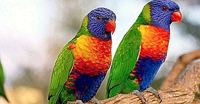 Gli Uccelli Più Colorati Da Tutto Il Mondo