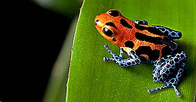 Les Animaux Les Plus Dangereux De La Forêt Amazonienne