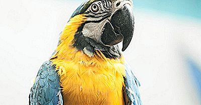 Die Am Meisten Bedrohten Papageien Der Welt