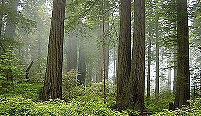 Parques Nacionales En California 2021
