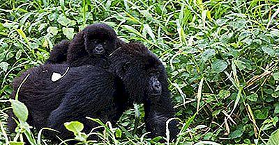 Parques Nacionales De La República Democrática Del Congo