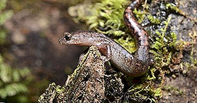 Native Amphibians Of Guatemala