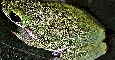 Einheimische Amphibien Von Nigeria