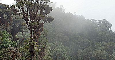 Anfíbios Nativos Da Papua-Nova Guiné