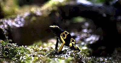 Amphibiens Indiens Du Venezuela