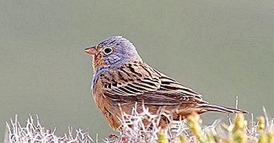 Einheimische Vögel Von Tschad