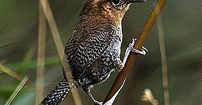Păsările Native Din Columbia