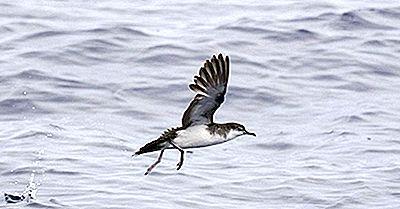 Aves Nativas De Irán