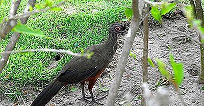 Păsările Native Din Mexic